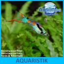 Aquintos Resin N Nitratharz - Nitratentferner für...